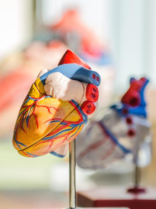 Messung der Herzratenvariabilität (HRV)
